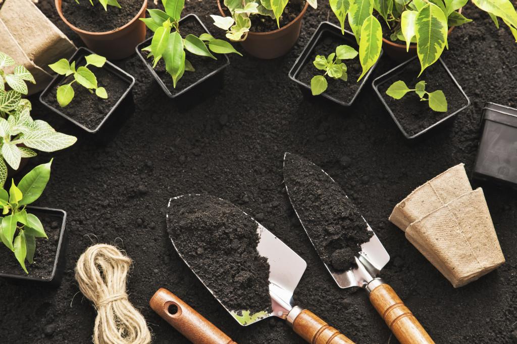 Planteringsfest på Stora Torget